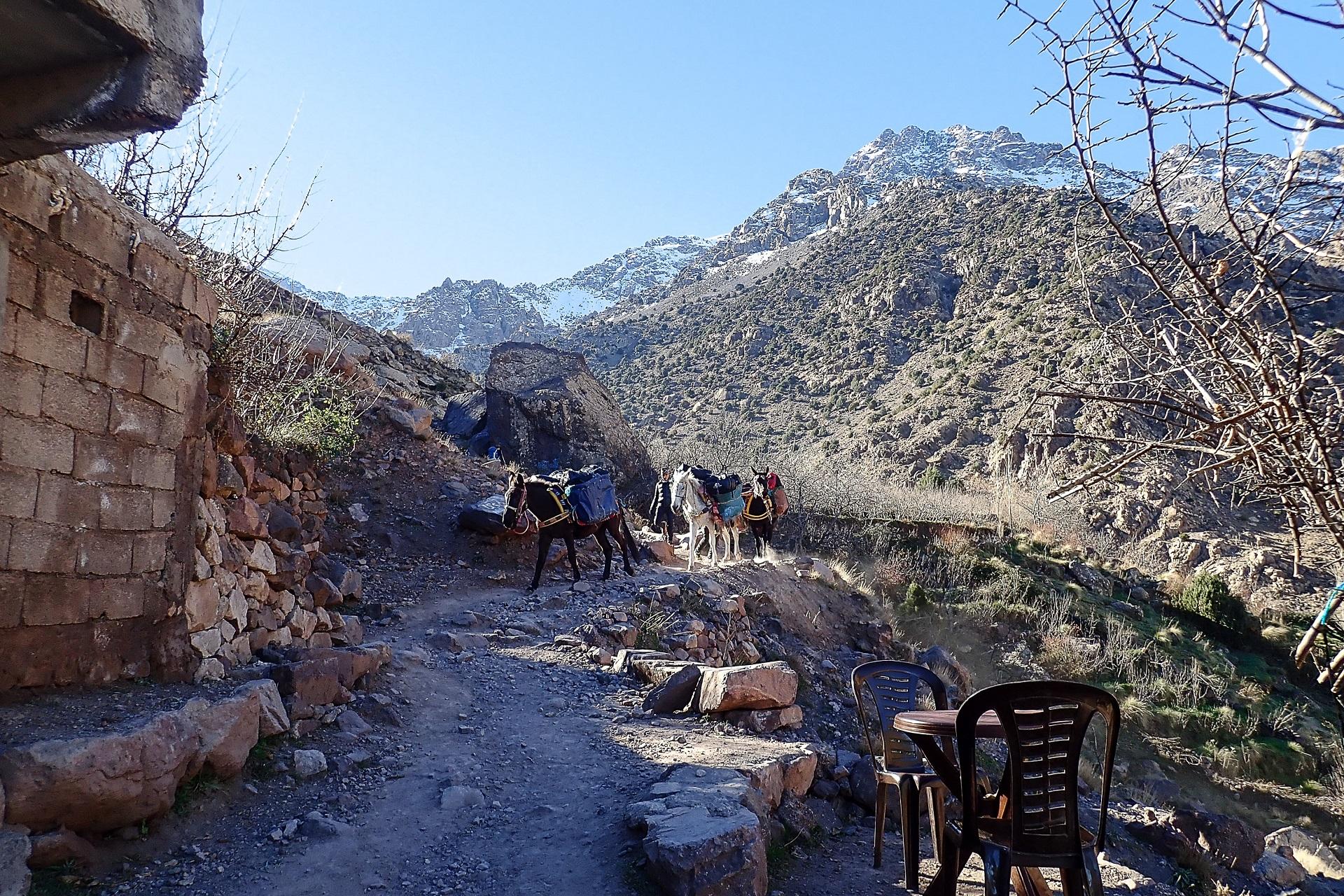 Częsty widok na szlaku - muły